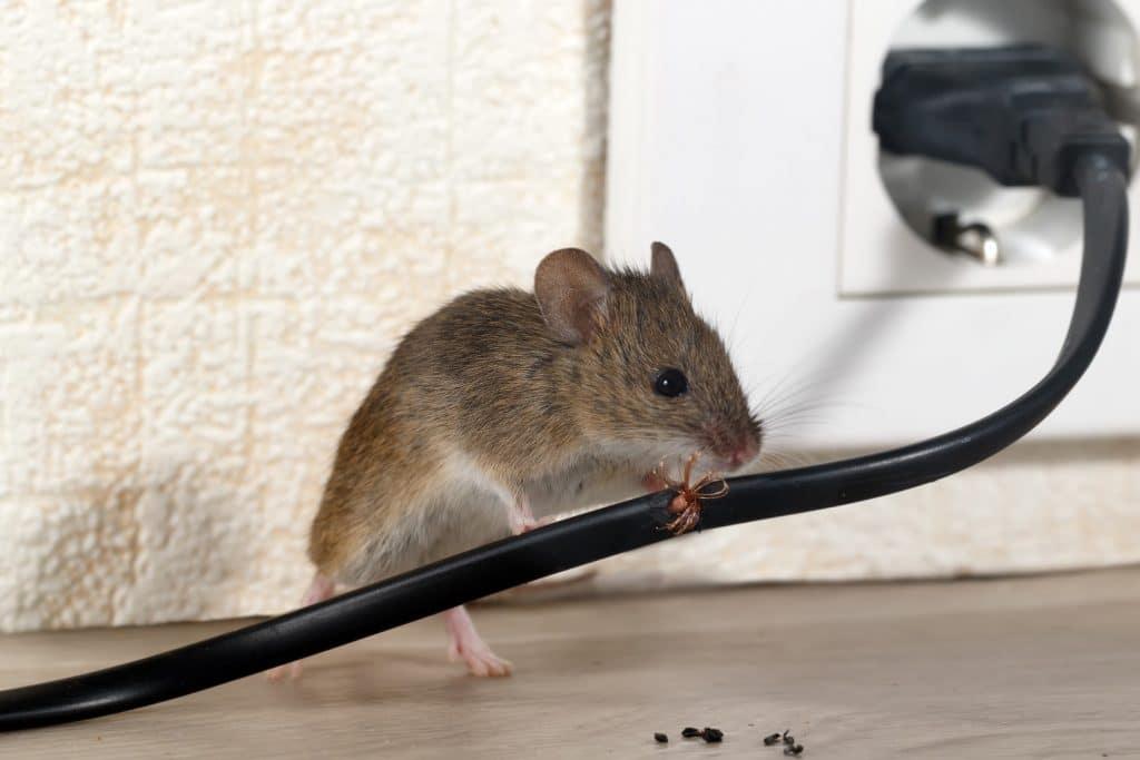 Pest Services - Clifford Pest Control