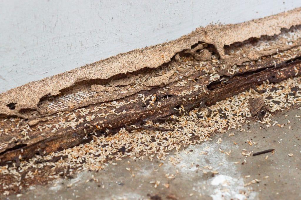 Termite Services - Clifford Pest Control