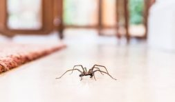 Expert Pest Management - Clifford Pest Control Lismore